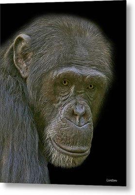 Chimpanzee Portrait Metal Print by Larry Linton