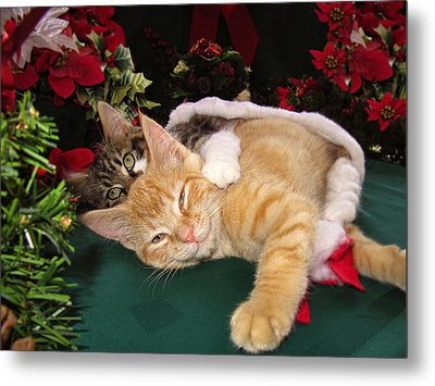 Christmas Time W Two Cats Together - Baby Maine Coon Kitty Cuddling With Smug Orange Tabby Kitten Metal Print by Chantal PhotoPix