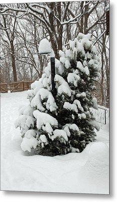 Christmas Tree Metal Print by Aimee L Maher Photography and Art Visit ALMGallerydotcom