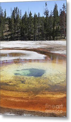 Chromatic Pool Hot Spring, Upper Geyser Metal Print by Richard Roscoe