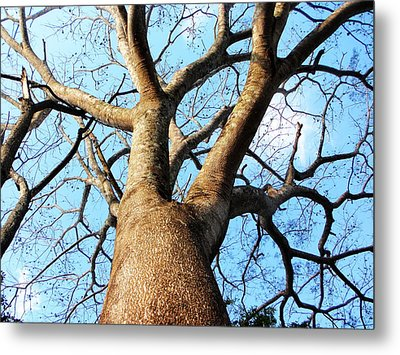 Climb To The Sky Metal Print by Rosvin Des Bouillons