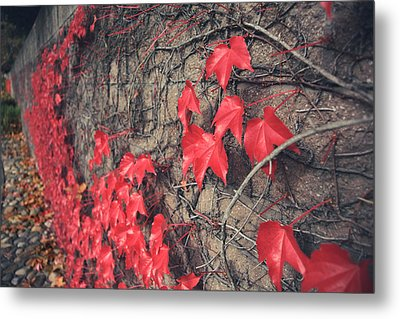 Clinging Metal Print by Laurie Search