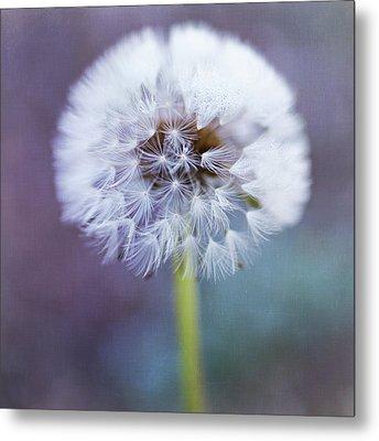 Close Up Of Dandelion Flower Metal Print by Pamela N. Martin