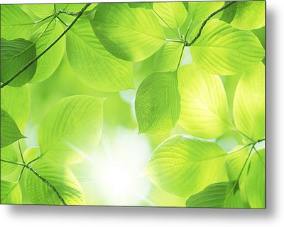 Close-up Of Fresh Green Leaves Metal Print by Imagewerks