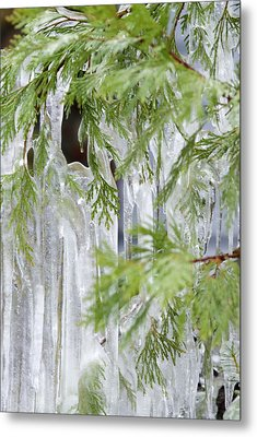 Close-up Of Ice Covered Tree Branch Metal Print by James Forte