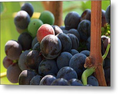 Close Up Of Wine Grapes Metal Print by Dina Calvarese