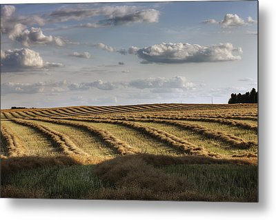Clouds Over Canola Field On Farm Metal Print by Dan Jurak