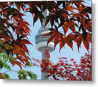 Cn Tower With Japanese Maple Metal Print by Alfred Ng