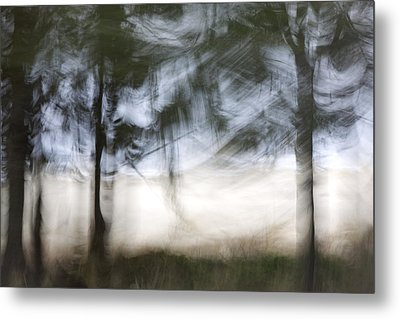Coastal Pines Metal Print by Carol Leigh