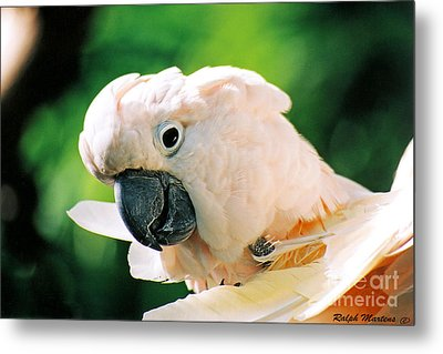 Cockatoo Parrot Metal Print by Ralph Martens