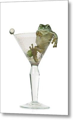 Cocktail Frog Metal Print by Darwin Wiggett