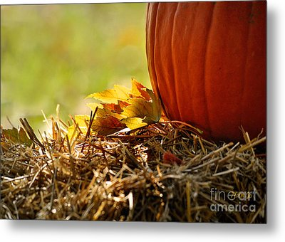 Colorful Autumn Metal Print by Nava Thompson
