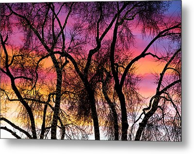 Colorful Silhouetted Trees 27 Metal Print by James BO  Insogna