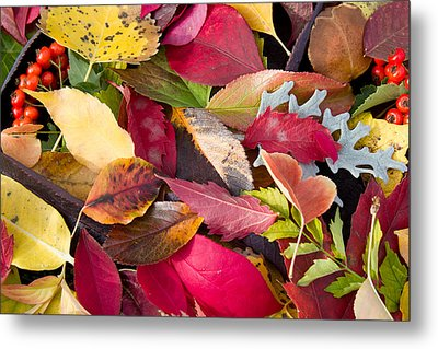 Colors Of Autumn Metal Print by Shane Bechler
