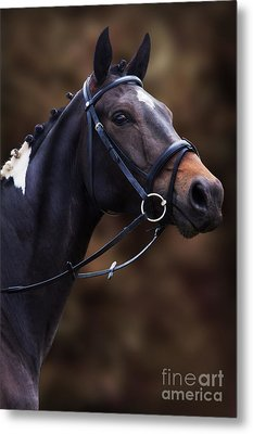 Coloured Show Horse Metal Print by Ethiriel  Photography