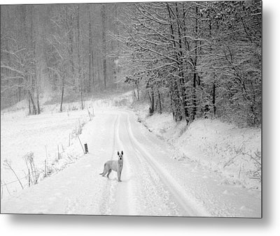 Come On Metal Print by Cheryl Helms