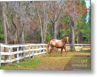 Coosaw - Outside The Fence Metal Print by Scott Hansen