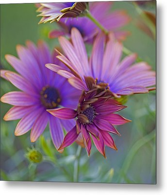 Copper Daisies 1 Metal Print by Bonnie Bruno