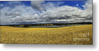 Corn Field Panorama Metal Print by Heiko Koehrer-Wagner