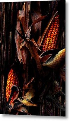 Corn Stalks Metal Print by Rachel Christine Nowicki