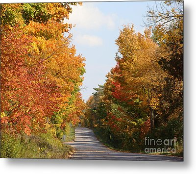 Country Road Metal Print by Beverly Livingstone
