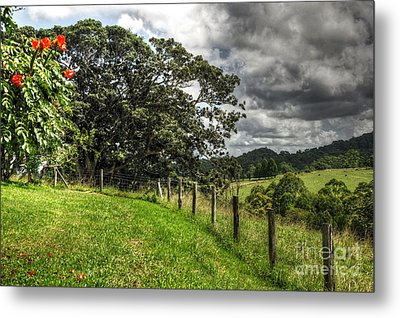Countryside With Old Fig Tree Metal Print by Kaye Menner