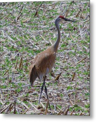 Crane In Corn Field Metal Print by Todd Sherlock