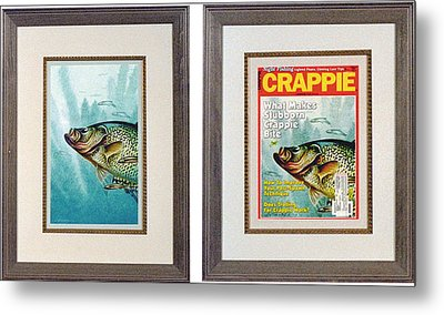 Crappie And Minnows Metal Print by JQ Licensing