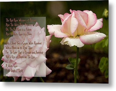 Cream White Rosebud With Poem Metal Print by Barbara Middleton