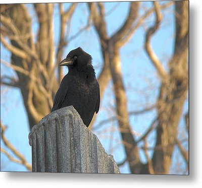 Crow In Wind Metal Print by Gothicolors Donna