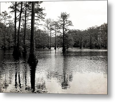 Cypress Trees In Louisiana Metal Print by Ester  Rogers