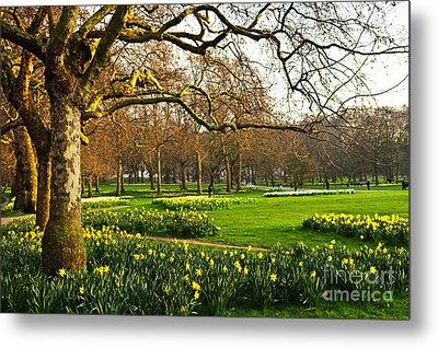 Daffodils In St. James's Park Metal Print by Elena Elisseeva