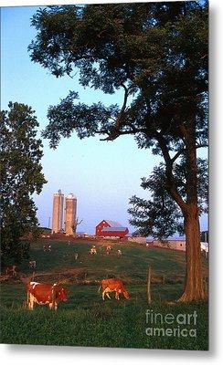 Dairy Farm Metal Print by Photo Researchers
