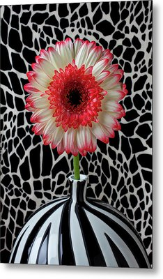 Daisy And Graphic Vase Metal Print by Garry Gay