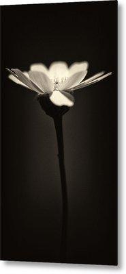 Daisy Flower Monochrome Metal Print by Stelios Kleanthous