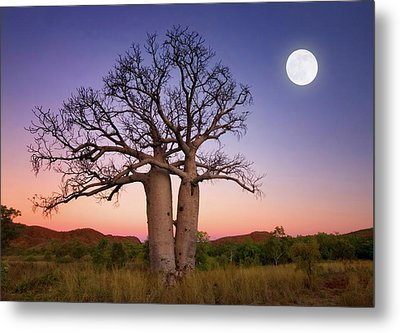 Dancing Boabs Kununurra Metal Print by Julie Fletcher