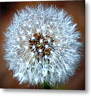 Dandelion Seed Metal Print by Marty Koch