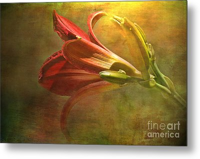 Daylily Photoart With Texture II  Metal Print by Debbie Portwood