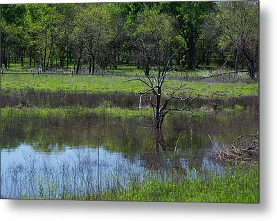 Deadwood Reflections Metal Print by Robyn Stacey