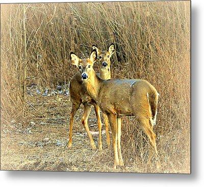 Deer Duo Metal Print by Marty Koch