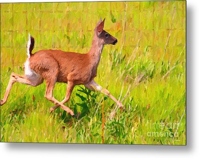 Deer Prancing In The Field Metal Print by Wingsdomain Art and Photography