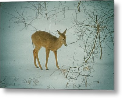 Deer Winter Metal Print by Karol Livote
