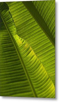 Detail Of Palm Tree Barbados Metal Print by Axiom Photographic