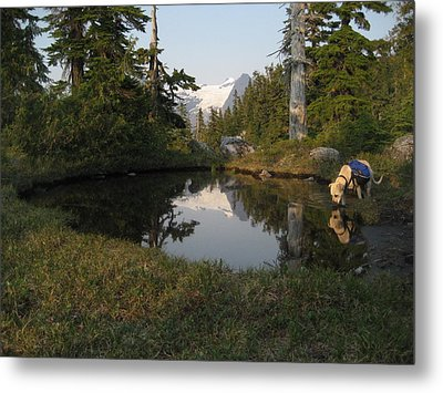 Dharma At The Pond Metal Print by Shawn Hegan