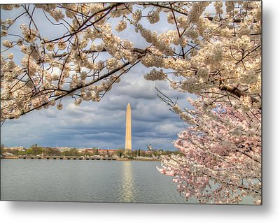 Digital Liquid - Cherry Blossoms Washington Dc 4 Metal Print by Metro DC Photography