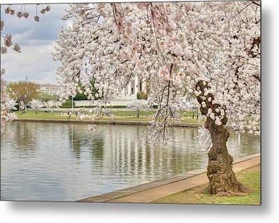 Digital Liquid - Cherry Blossoms Washington Dc 6 Metal Print by Metro DC Photography
