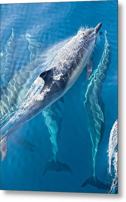 Dolphins Life Metal Print by Steve Munch