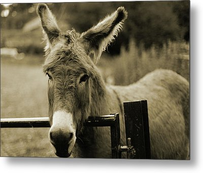 Donkey Metal Print by Dyker_the_horse_1976