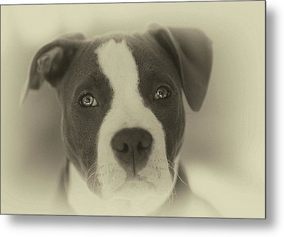 Don't Hate The Breed Metal Print by Larry Marshall