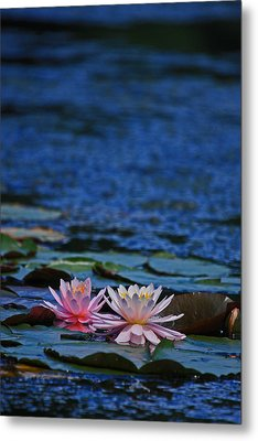 Double Lily Metal Print by Karol Livote